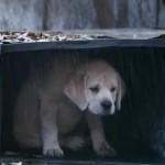 Budweiser's 'Lost Dog' Superbowl commercial is te schattig voor woorden