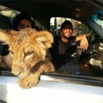 Vice docu: The Illegal Big Cats of Instagram