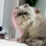 Het onomstotelijke bewijs dat katten echt ontzettende hufters zijn