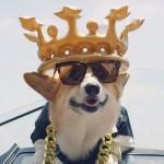 Blije hond erft miljoenen en leeft vervolgens als Dan Bilzerian