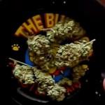 The Bulldog Amsterdam: 'hoe draai je nou de perfecte joint?'