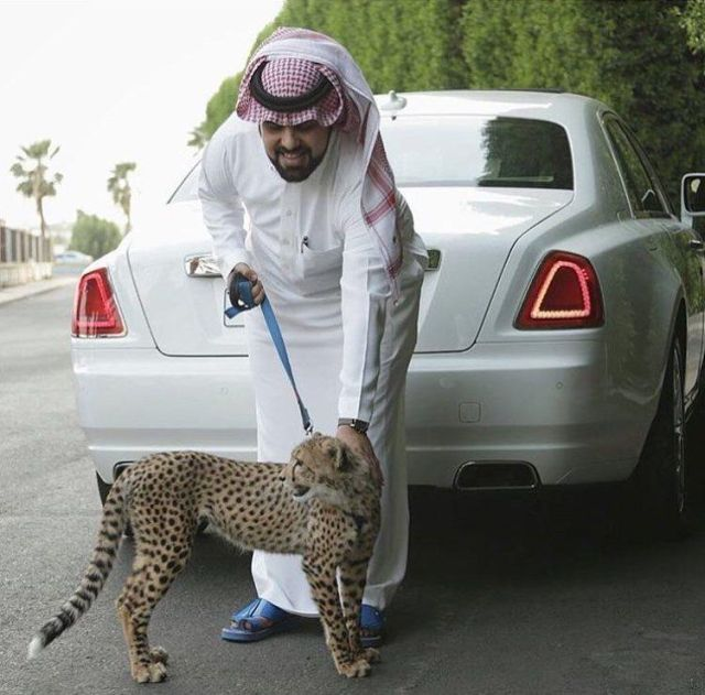arabs (32)