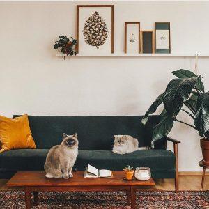groene bank, plant ernaast, kat op houten salontafel witte muur, plank boven bank met decoraties